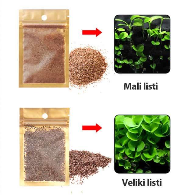 Semena za akvarijske rastline - Mali in veliki listi 2