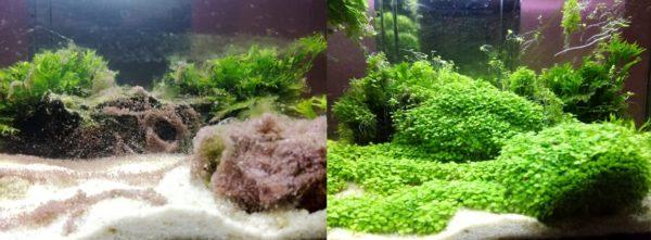 rastline v akvariju