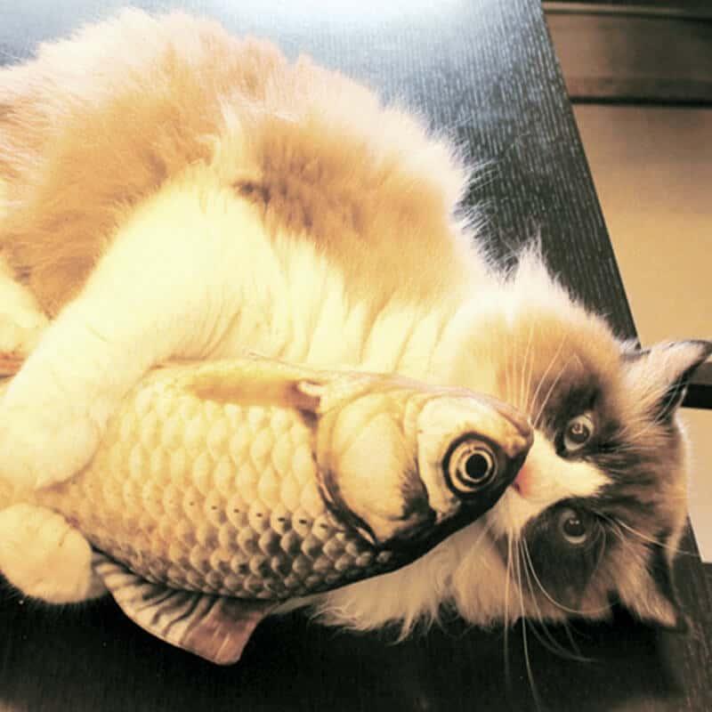 mačja igračka kjer se mačka igra z igračo ribo krap