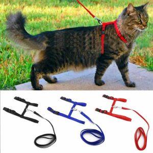povodec za mačke